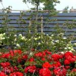 farba do ogrodzeń