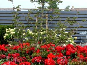 farby do ogrodzenia